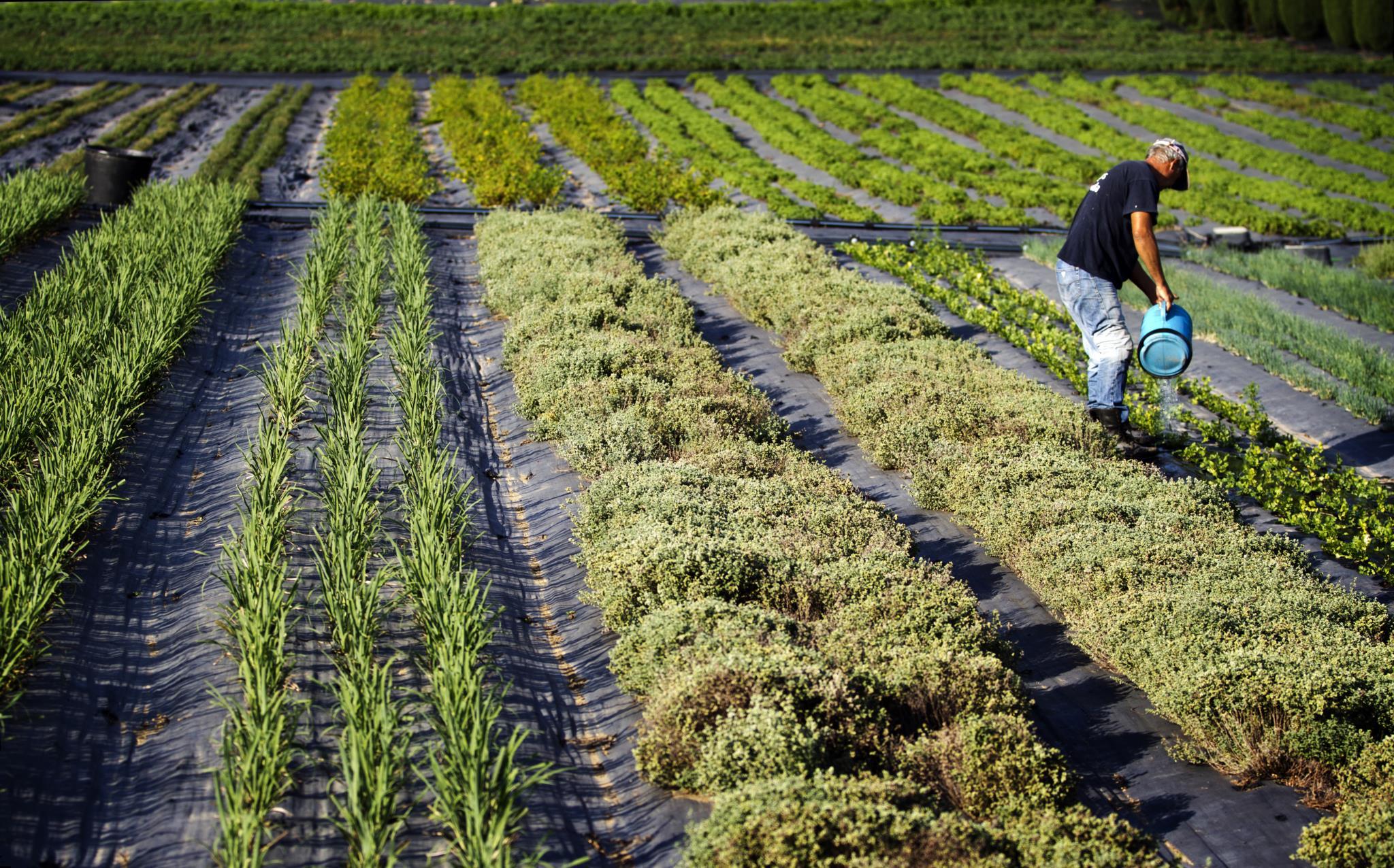 A agricultura surgiu no Médio Oriente há cerca de dez mil anos (NFACTOS/LARA JACINTO)